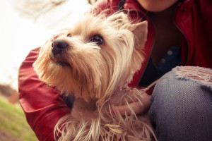Dog-Friendly Places in Tenleytown, DC